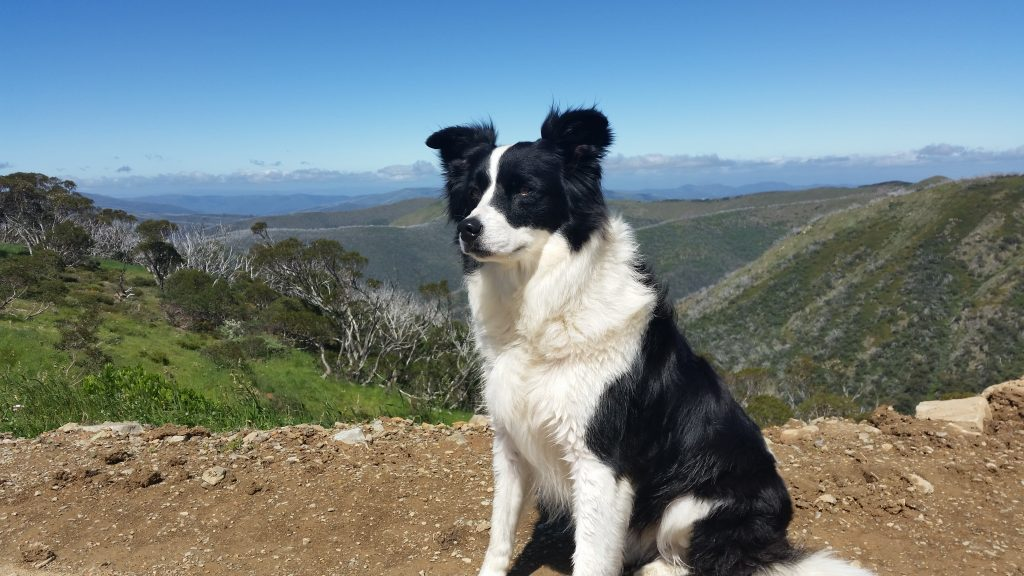 How's the serenity? We all take in the views at Mount Hotham.