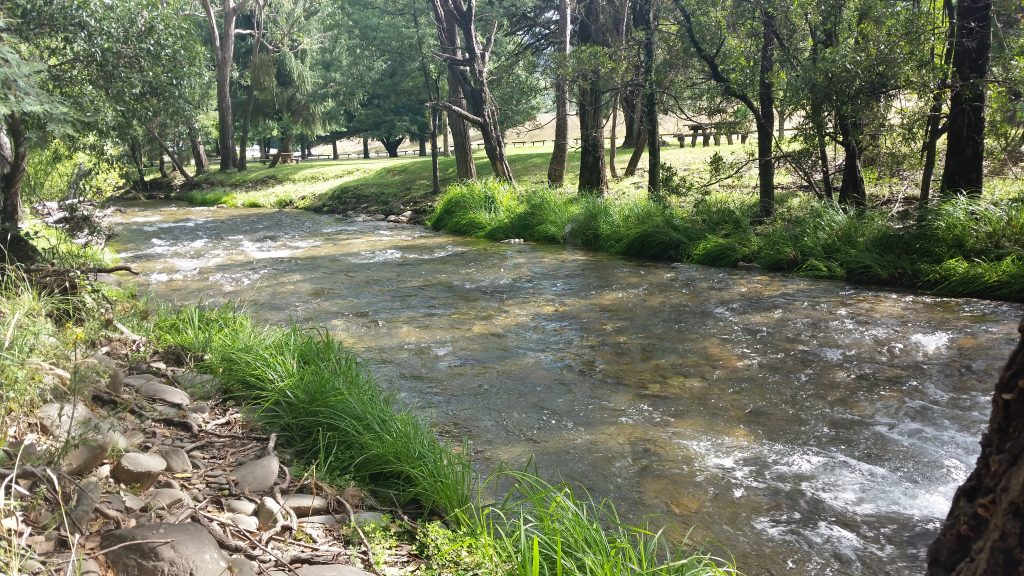 The refreshing Ovens River at Harrietville