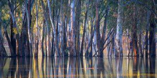 Ann Killeen's prize winner photo 'floodways'